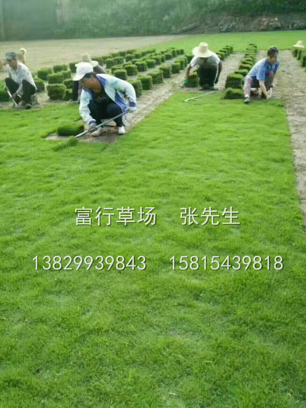 梅州草皮批發