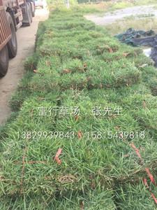 廣東惠州草皮場
