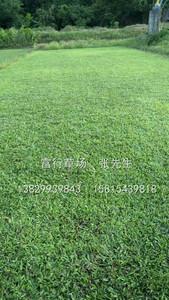 廣東草皮價格