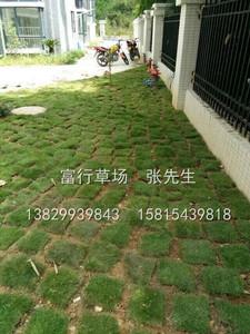 廣東草皮鋪設