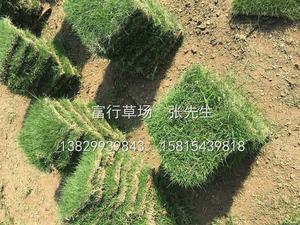 馬尼拉草皮出售