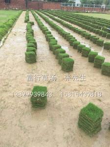 惠州草皮場