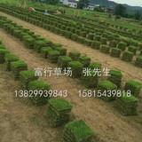 惠州草皮出售