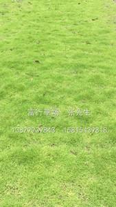 惠州草皮基地